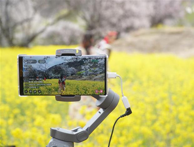 高原花兒開,靜待遊客來——西藏林芝首次啟用5G直播呈現桃花美景
