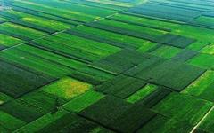 吉林:2020年底將建成3300萬畝高標準農田
