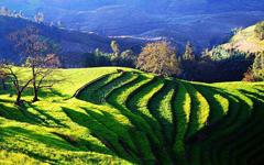 云南出台促进农村消费方案