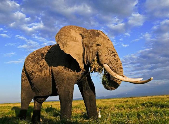 加入《濒危野生动植物种国际贸易公约》40年来我国履约成效瞩目